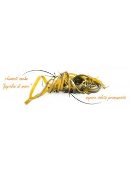Alghe Spaghetti di mare disidratate in rami (50g) - BIO